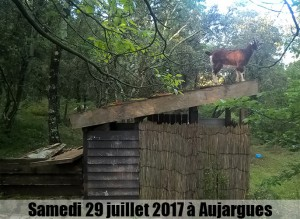 Le Kayou d'Aujargue