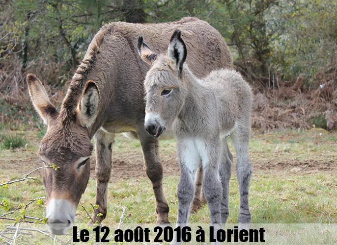 Etape de Lorient à